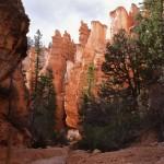 Below the Rim, Bryce Canyon, Utah