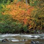 North Fork Skykomish River, Wild Sky Wilderness, WA
