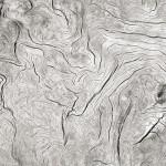 Tofino Driftwood, Vancouver Island