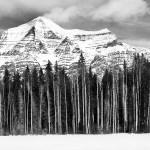 Aspens, Mt. Robson, Canada