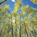 Grand Staircase Aspens, Utah