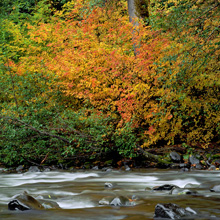 North Fork Skykomish River, Wild Sky Wilderness, Washington