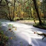 Upper Quinault River, Olympic National Park